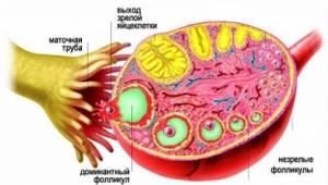 Что происходит в организме женщины во время месячных