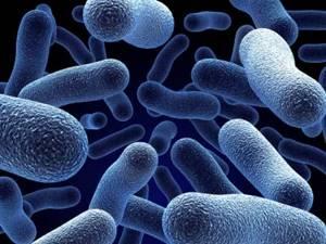 Как можно заразиться молочницей: пути распространения грибковой инфекции