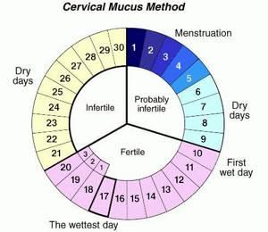 Как правильно рассчитать продолжительность менструального цикла