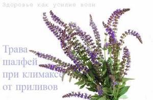 Лекарственные травы – верные помощники в борьбе с симптомами климакса
