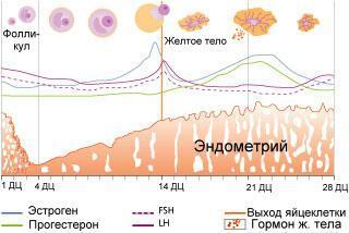 Симптомы и лечение очаговой гиперплазии эндометрия