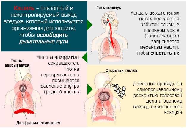 Сироп от кашля для детей: 4 группы препаратов и советы педиатра